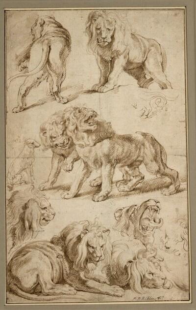 Skizzenblatt mit zehn Löwenstudien und einem sitzenden Hund von Anonym