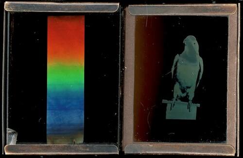Sonnenspektrum und Papagai von Richard Neuhauss
