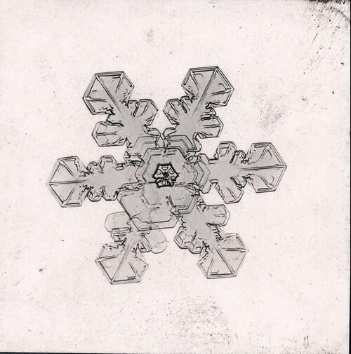 Schneekristall, 30-fache Vergrößerung, bei 8° Celsius aufgenommen, Präparat angefärbt mit einem Tropfen farbigen Öls von Richard Neuhauss