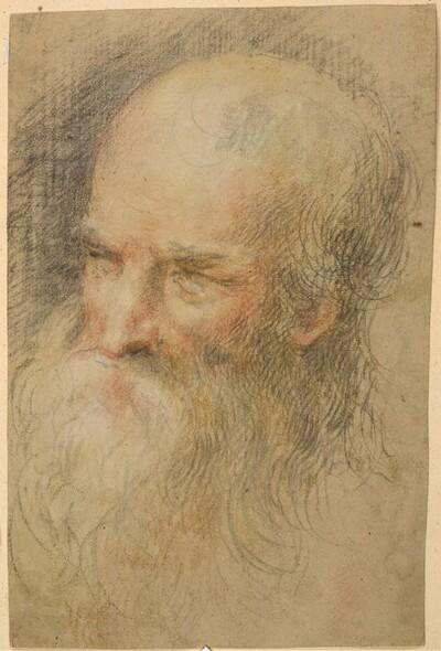 Kopf eines bärtigen Mannes von Peter Paul Rubens