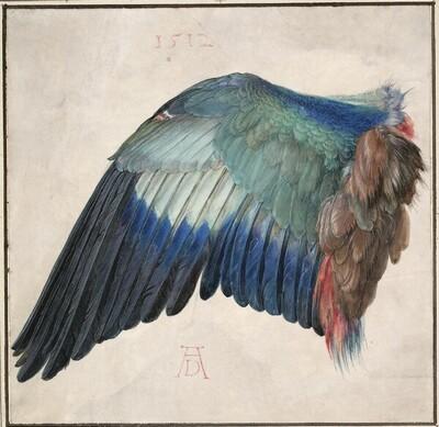 Der Flügel einer Blauracke von Albrecht Dürer